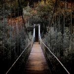 Bridge Into Woods